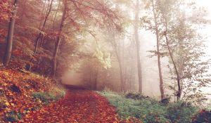 Leśna trasa biegowa
