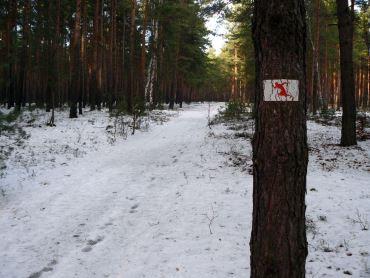 Trasa biegowa / Czerwona MOSiR Zielona Góra (4,4 km)