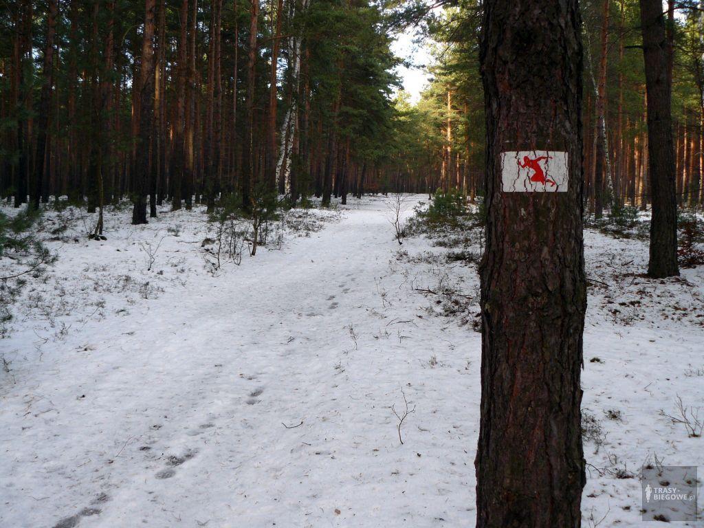 Czerwona MOSiR Zielona Góra (4,4 km)