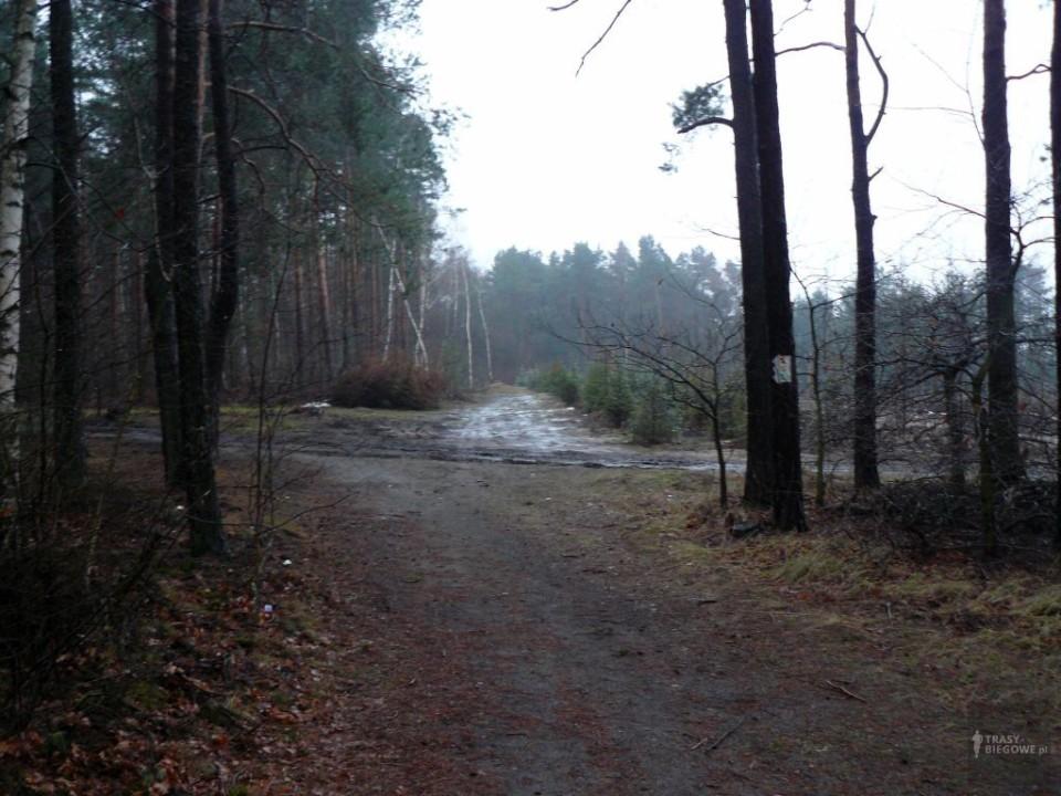 Trasy biegowe: MOSiR Zielona Góra - Zielona