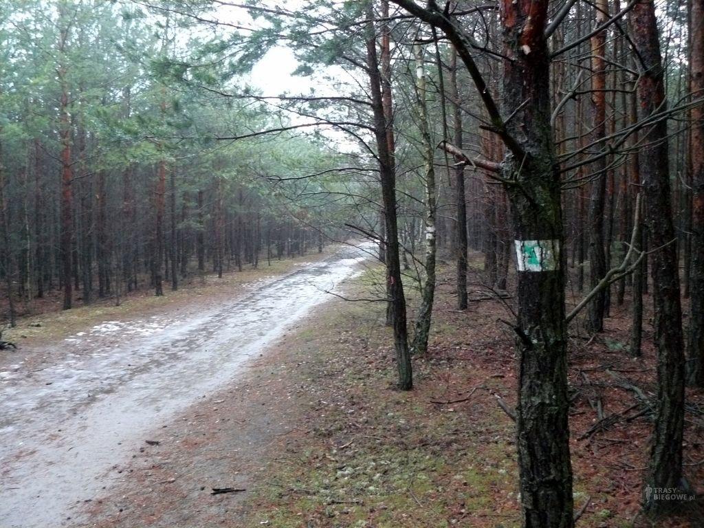 Zielona MOSiR Zielona Góra (1,8 km)