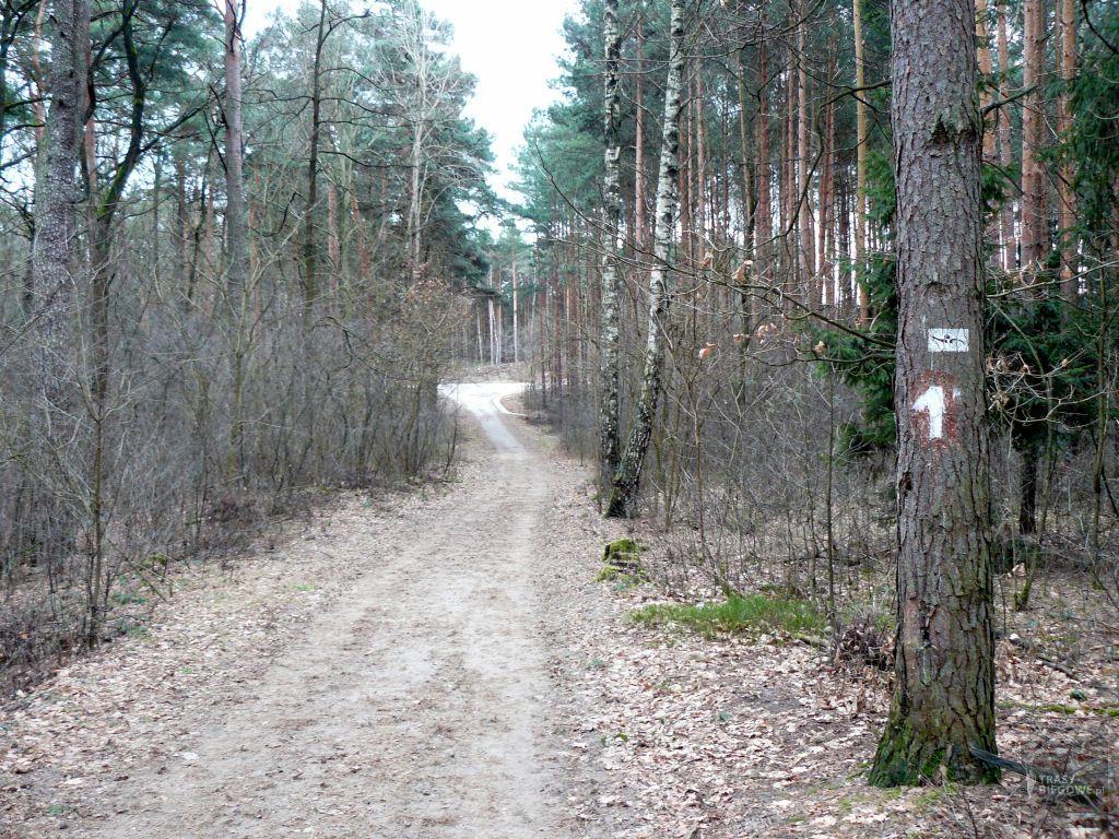 Parszywa 12 (12,2 km)