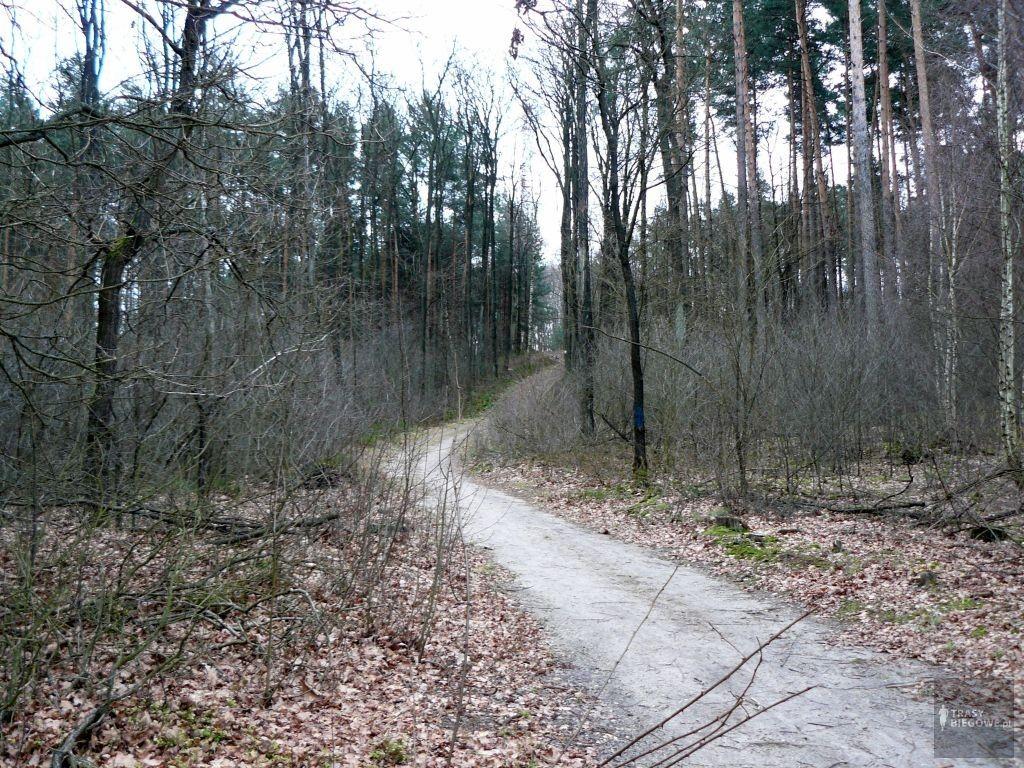 Trasy biegowe: Parszywa 12, Zielona Góra, woj. Lubuskie