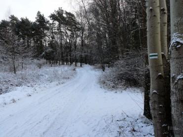 Trasa biegowa / Zielona Nowa (5,1 km)