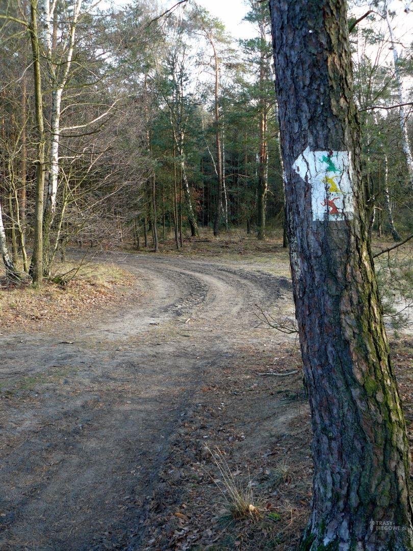 Trasa biegowa MOSiR Zielona Góra - zółta
