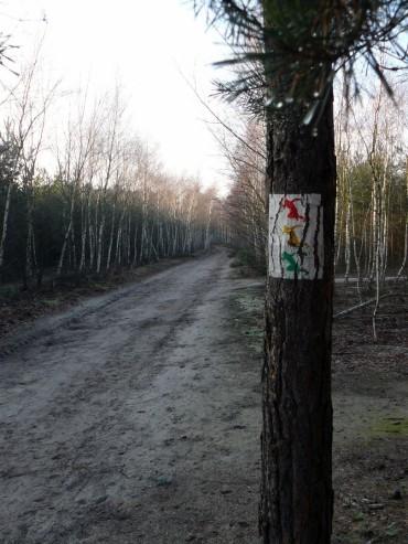 Trasa biegowa / Żółta MOSiR Zielona Góra (2,3 km)