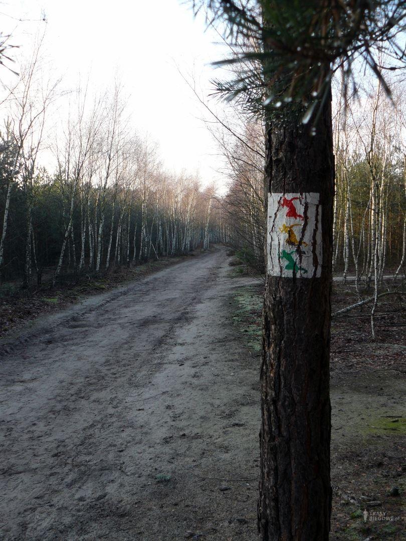 Żółta MOSiR Zielona Góra (2,3 km)