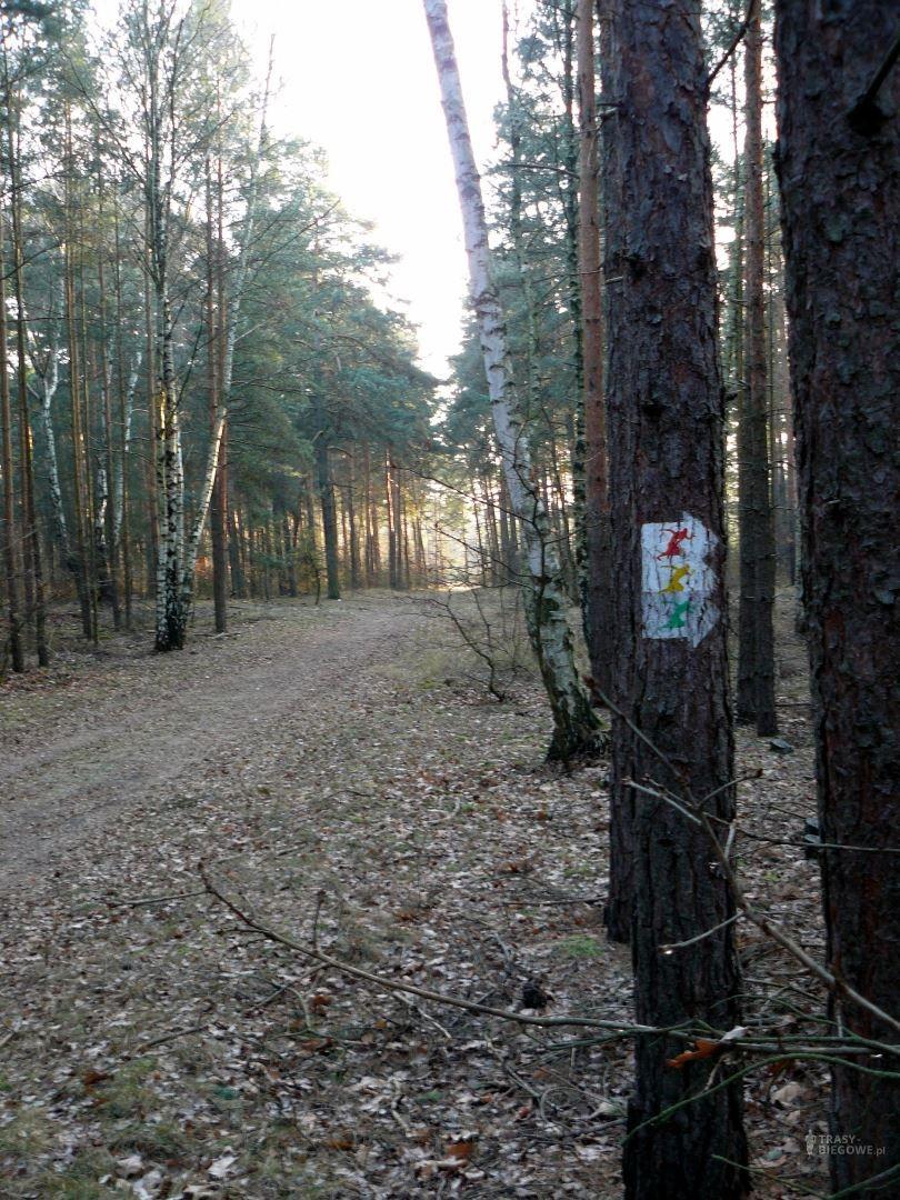 Trasy biegowe: MOSiR Zielona Góra - zółta
