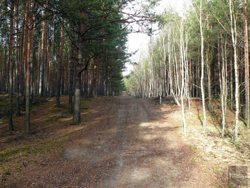 Trasy biegowe: Jorge Cross, Czerwieńsk, woj. Lubuskie
