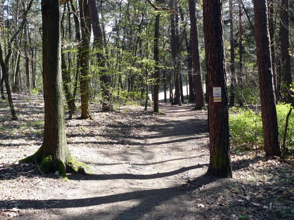 Trasy biegowe: Mała Piasta, Zielona Góra, woj. Lubuskie