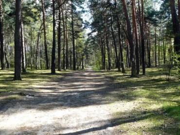 Trasa biegowa / Mała Piasta (5,0 km)