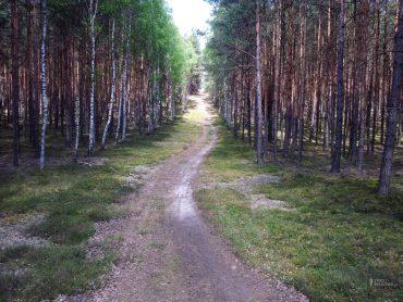 Trasa biegowa / Ronin Race (10,2 km)