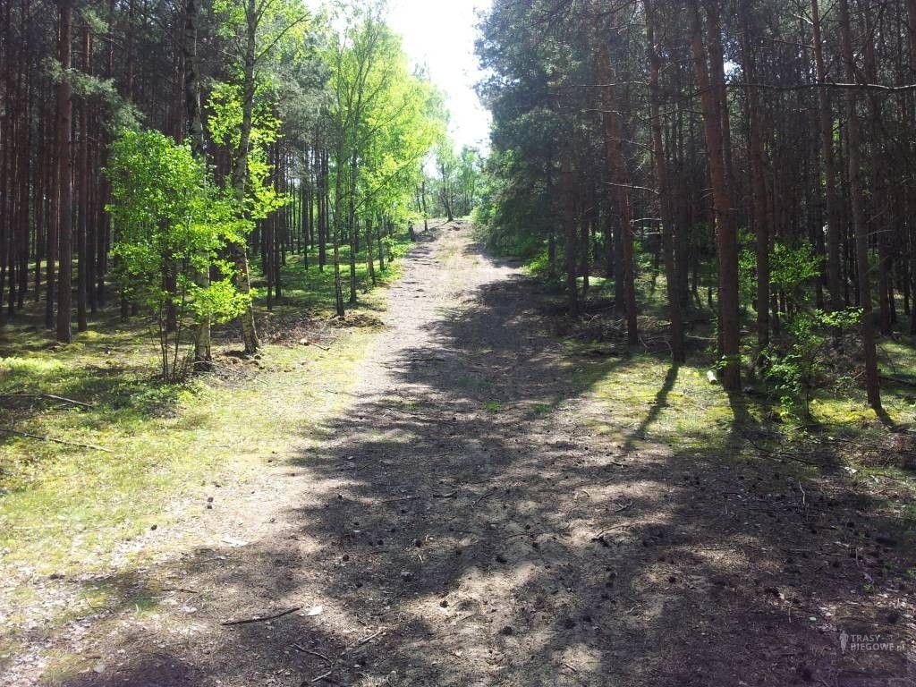 Trasy biegowe: Ronin Race, Czerwieńsk, woj. Lubuskie