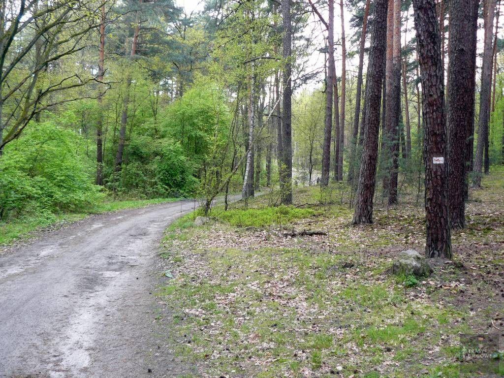 Trasy biegowe: Szybki Bismarck, Zielona Góra, woj. Lubuskie