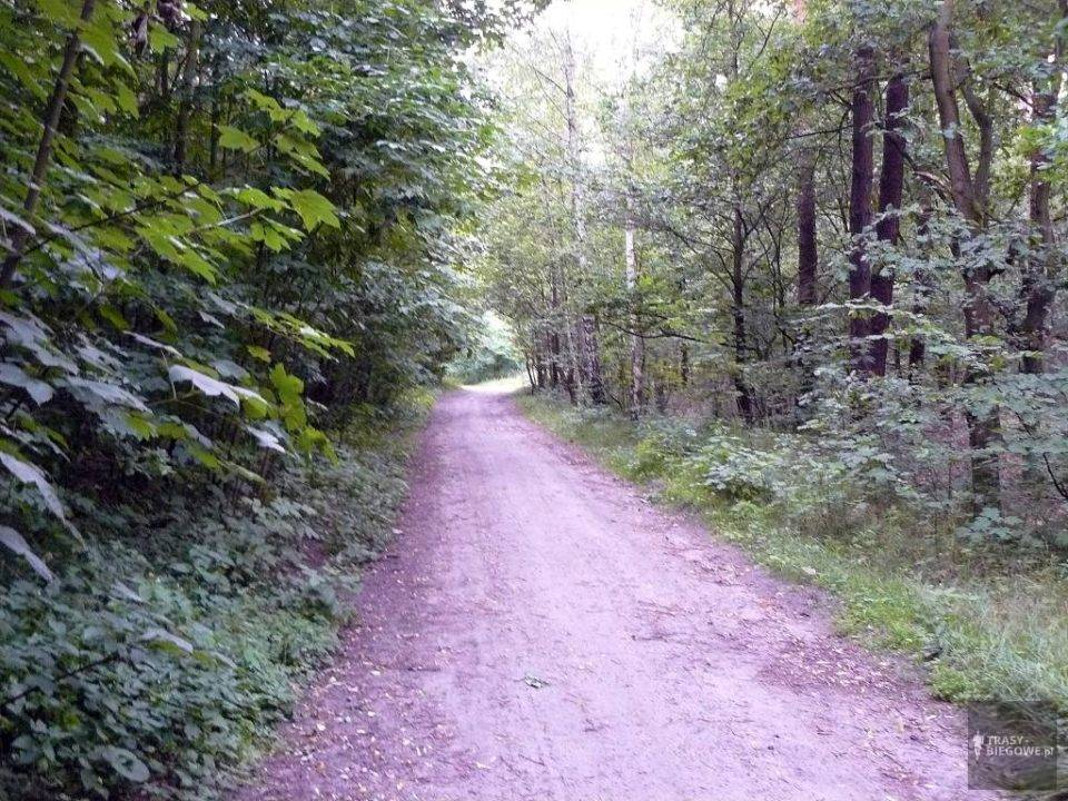 Trasy biegowe: Czas na sport, Zielona Góra, woj. Lubuskie