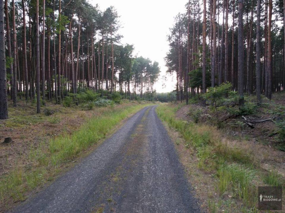 Trasy biegowe: Sudoł, Zielona Góra, woj. Lubuskie