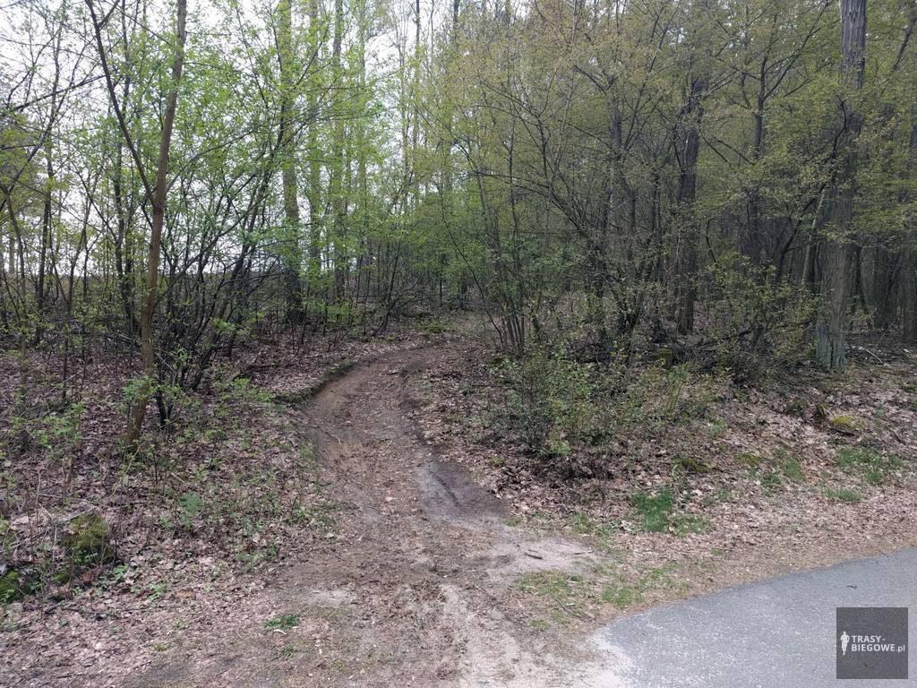 Trasy biegowe: Tarka, Zielona Góra, woj. Lubuskie
